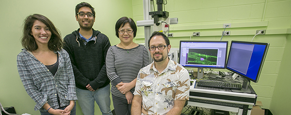 David Q. Matus, PhD, (seated far right), in his Stony Brook laboratory where researchers study cells and cancer processes. Also involved in the research are, from left: Mana Chandhok, a PhD student; Ivan Chavez, a Master's student, and Wan Zhang, laboratory technician. On the computer screen is a microscopic image of a C. elegans anchor cell (purple area) invading through the tissue membrane (green area).