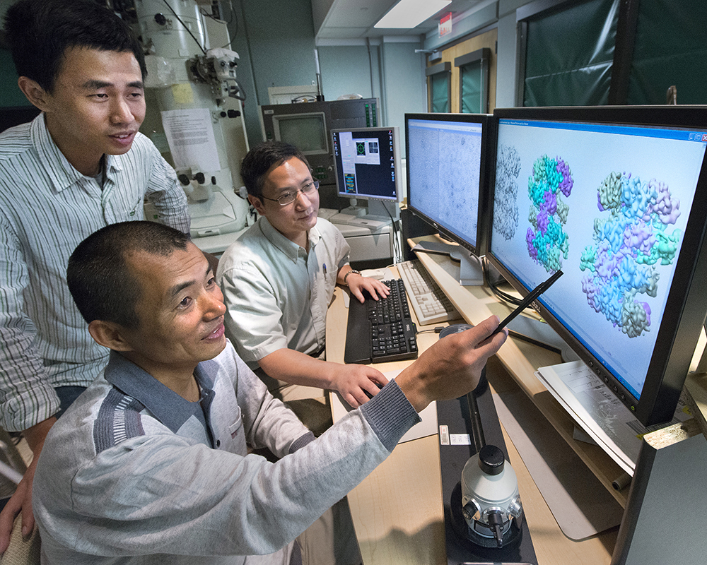 Professor Huilin Li (seated, back), examines protein structures with collaborators and study coauthors Zuanning Yuan (standing), and Jingchuan Sun.