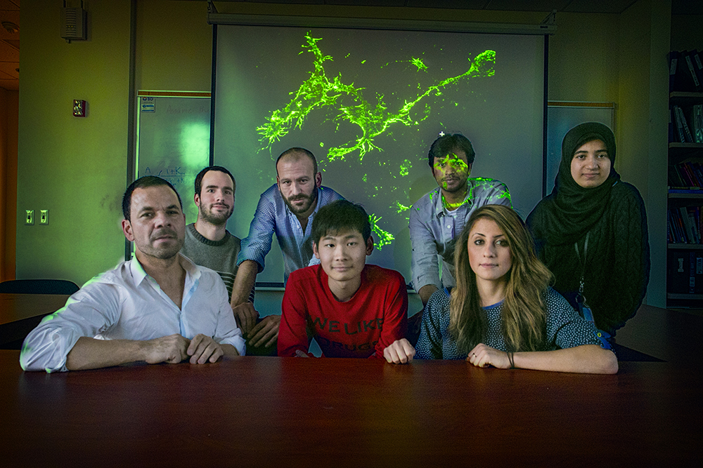 The Stony Brook research team investigating the glial cell, NG2, shown in background, has discovered loss of these brain cells causes depression. Front row, from left: Adan Aguirre, lead investigator; Jianchoo Gao, and Nadia McMillan. Back row, from left: Michael Klingener, Javier Palazuelos, Manideep Chavali, and Israa Hussein.