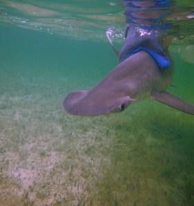 Bahamian shark sanctuary