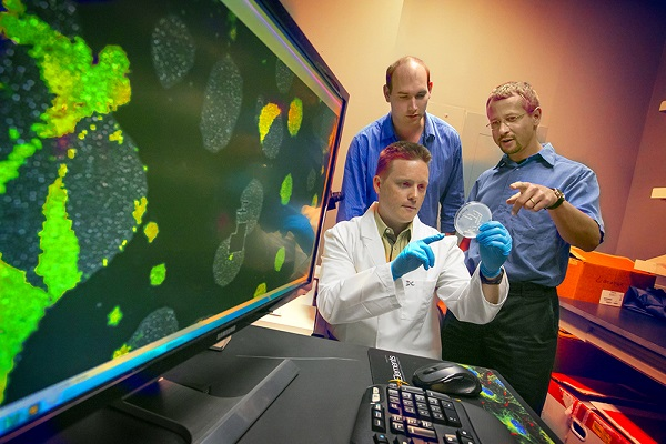 Gábor Balázsi, upper right, discusses yeast cell populations used in experiments to predict cellular evolution with postdoctoral fellows Daniel Charlebois (seated) and Tamás Székely. A close-up of the yeast cells on the screen reveal those that switched on drug resistance, colored green.