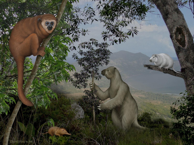 Cooke extinctcarrib rini final min