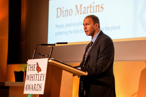 Dino martins 1