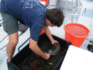 Dr demian chapman leader of research team with winter flounder articlemanager 1