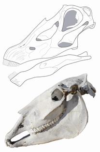 Figure2diplodocusandhorse