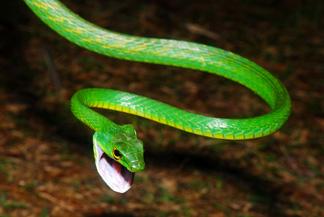 Parrot snake andrew snyder web 1
