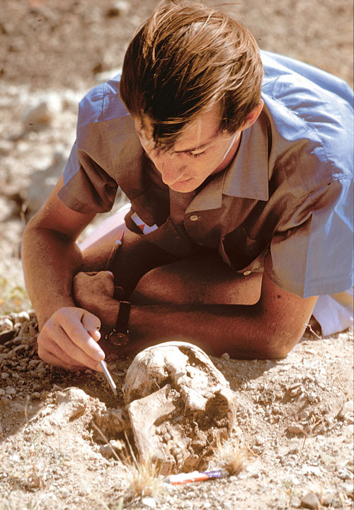 Richard Leakey excavates a fossilized skull of early Homo sapiens at Alia Bay on the east side of Lake Turkana in 1968. Photo by Robert Campbell