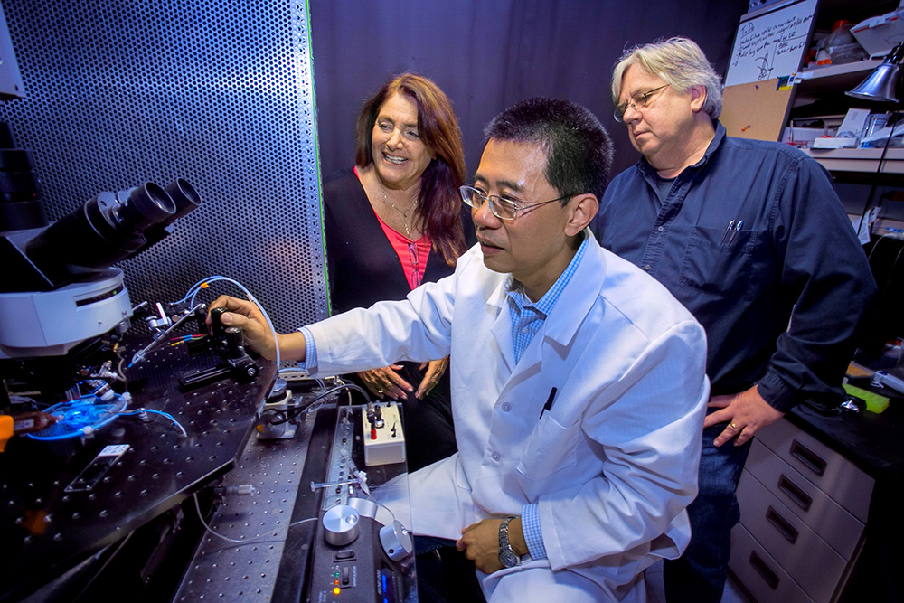 A Stony Brook University research team has developed a method to manipulate the neurotransmitter acetylcholine to control memory in mice. Members of the team include: Li Jiang (at microscope), Lorna Role, and David Talmage.