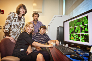 Stony brook researchers for web
