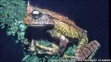 Treefrog web size