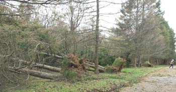 Trees down in r d park 1