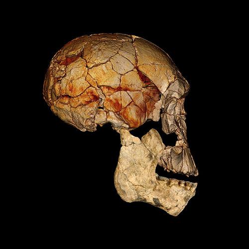 Turkana fossils 1