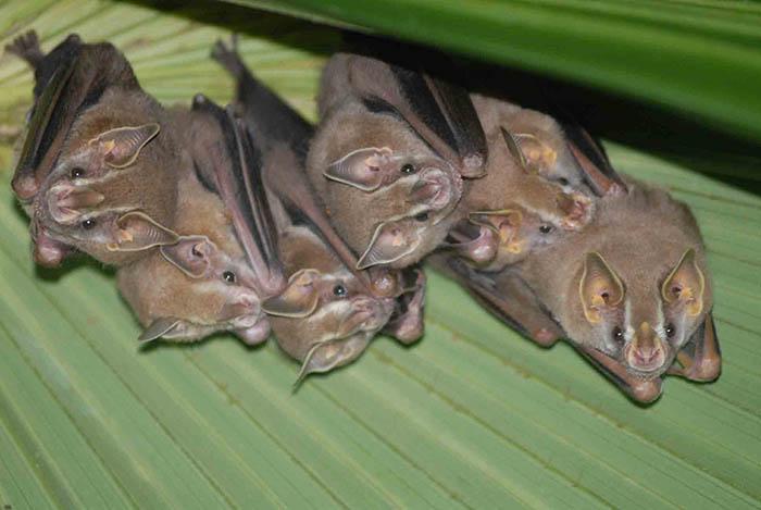 Bat 1 1