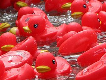 Ducksspot 1