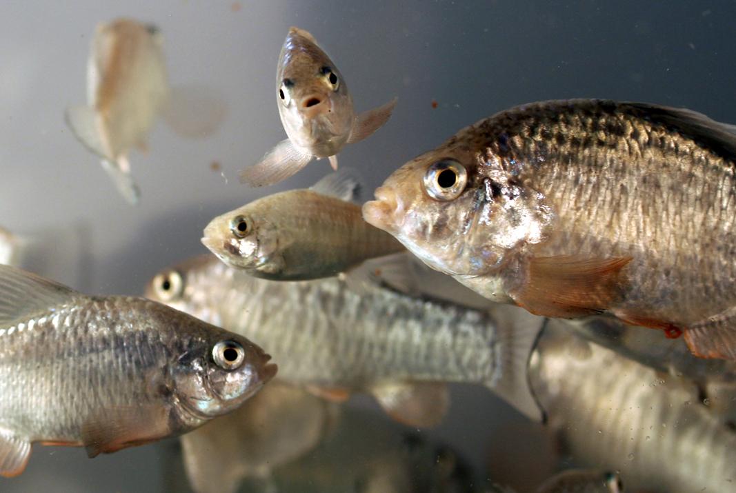 Fish offspring 1