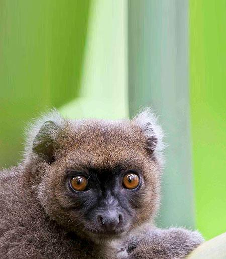 Lemurspot