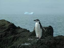 Penguinlores