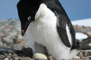 Penguinfixed