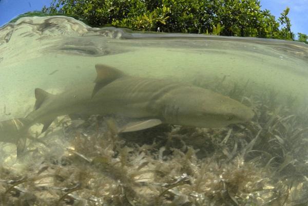 Shark in lagoon