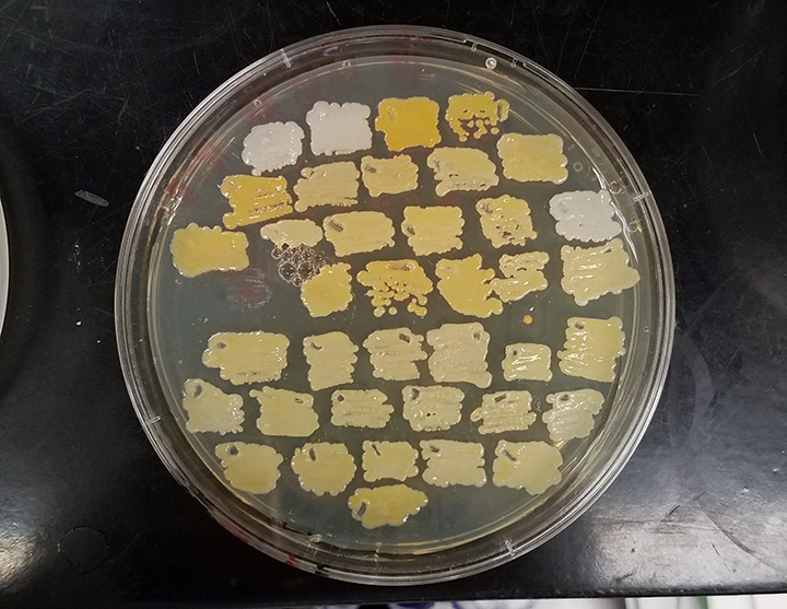white carotenoids on plate