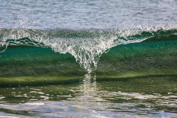 Three SBU fauclty appointed to task force to study NY ocean acidification