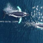 20180824 dji humpback2