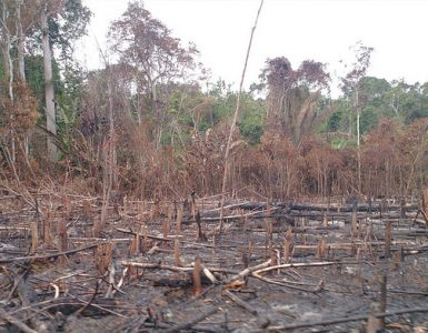 Colombia deforestation