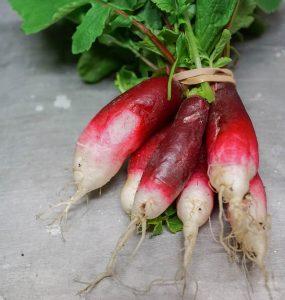 Freight Farm radishes