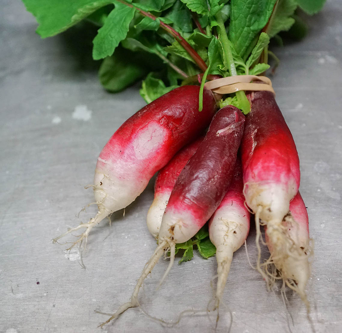 Freight Farm radishes