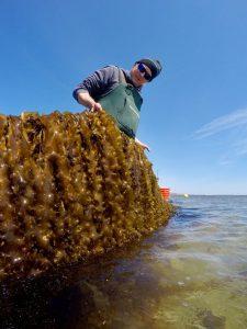 Kelp photo 2