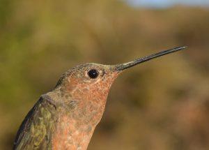 Hummingbird2 002 1