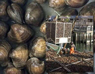 Hard clams (photo by Bassem Allam); Inset photo: A worker at Norm Bloom & Son Oysters offloads shellfish harvested from the company's beds in Norwalk (photo by Judy Benson, Connecticut Sea Grant)