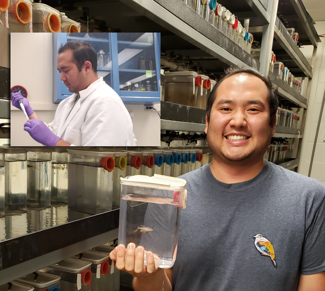 A large portion of Irvin's dissertation research took place in the lab (seen in inset). Irvin, an advanced graduate student at Stony Brook University's School of Marine and Atmospheric Sciences, uses molecular biology to understand the impacts of pollutants on fish health and survival. He is also pictured in SBU's zebrafish facility. The zebrafish is a model species that can offer clues to the developmental and behavioral effects of sublethal exposure to pharmaceuticals found in wastewater effluent. Credit: Irvin Huang.