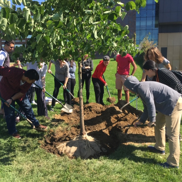 Stony Brook grounds staff and student volunteers planted an Eastern Redbud on the Simons Center lawn.