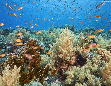 coral reef