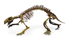 2. adalatherium skeleton left lateral