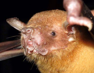 Batspeciesvirusstudy