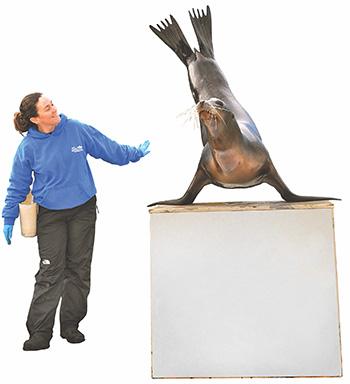 Sea lion trainer LI Aquarium