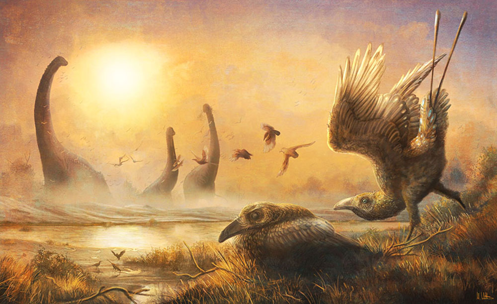 Prehistoric Bird Fossil Offers Clues to Evolution