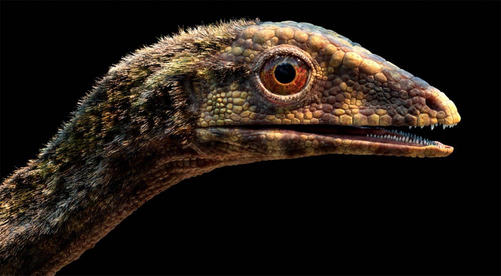Pterosaur reconstruction
