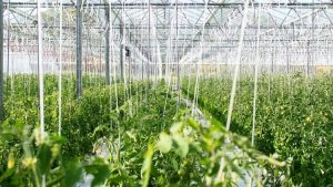 Renuble greenhouse
