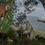 Sloths, rodents and primates — some of the largest and smallest mammals on Caribbean islands — are among those most vulnerable to extinction. Credit: David Rini, Johns Hopkins University