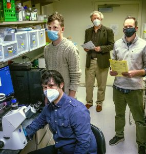 In the laboratory in which Stony Brook researchers study tissue and investigate the loss of function in PLD1 variants, are researchers: Michael Frohman, MD, PhD (rear center); 5thyear Pharmacology student Christian Salazar (seated); 5thyear Biochemistry and Structural Biology student Forrest Bowling, and Michael Airola, PhD.
