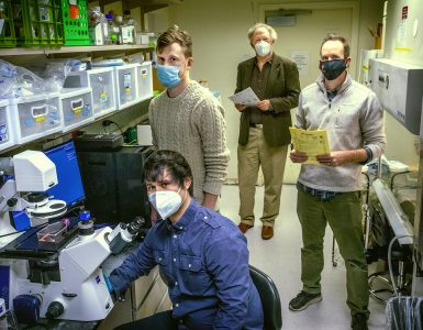 In the laboratory in which Stony Brook researchers study tissue and investigate the loss of function in PLD1 variants, are researchers: Michael Frohman, MD, PhD (rear center); 5th year Pharmacology student Christian Salazar (seated); 5th year Biochemistry and Structural Biology student Forrest Bowling, and Michael Airola, PhD.