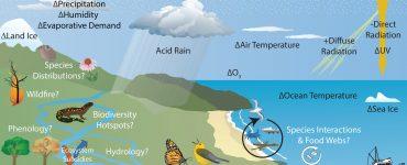 Sai effects on natural world