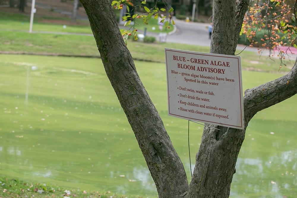 Roth pond algae