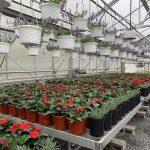 Sbu greenhouse