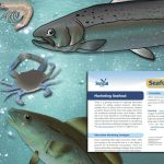 Seafood Guide 7: Marketing Seafood offers various marketing strategies and tools to help New York seafood producers sell their seafood in alternative markets.